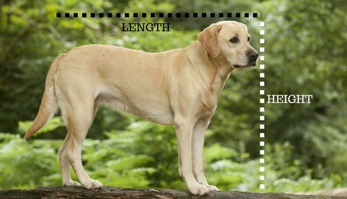 dimensiones de la caseta según las medidas del perro