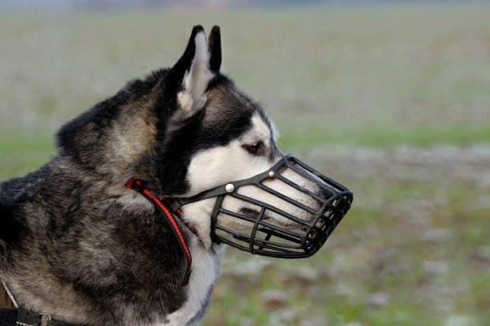razas de perros peligrosos