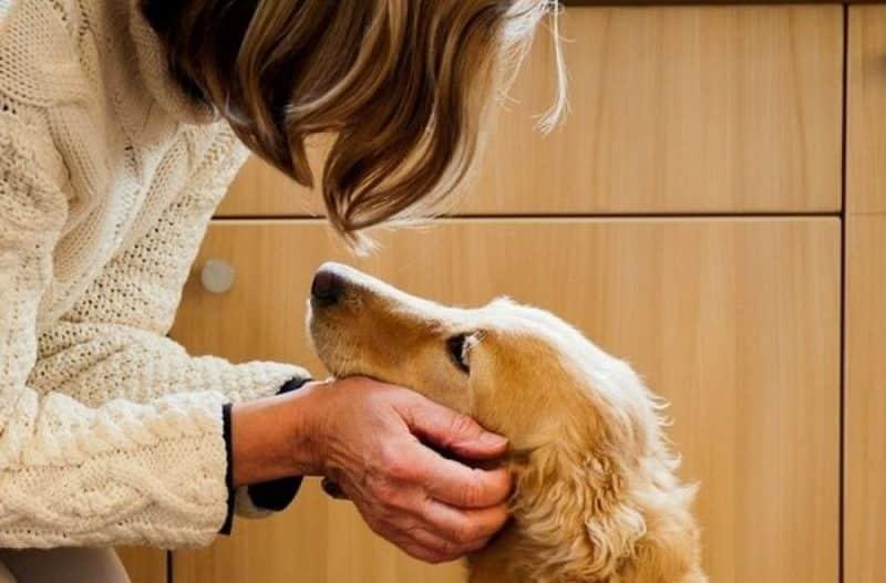 como hacer vomitar a un perro