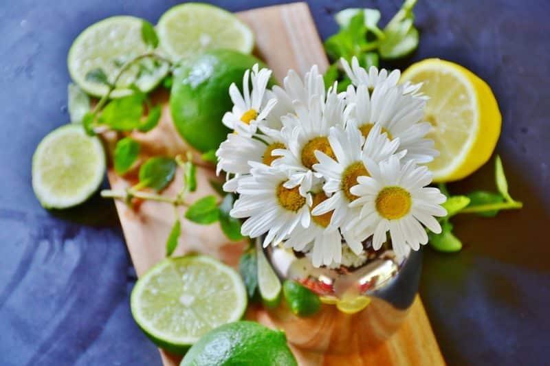 remedios naturales para evitar las garrapatas