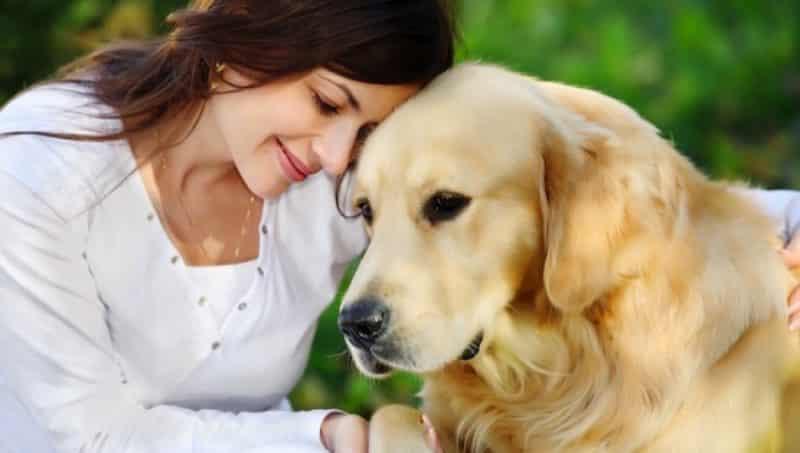 como saber si un perro tiene fiebre