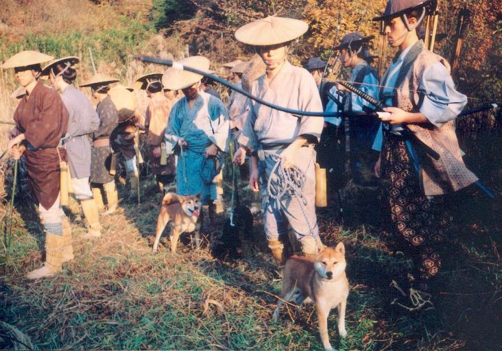 historia del Shiba Inu