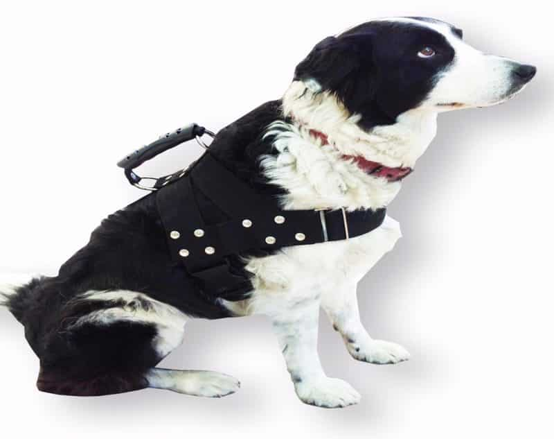 arnés anti tirones para perros