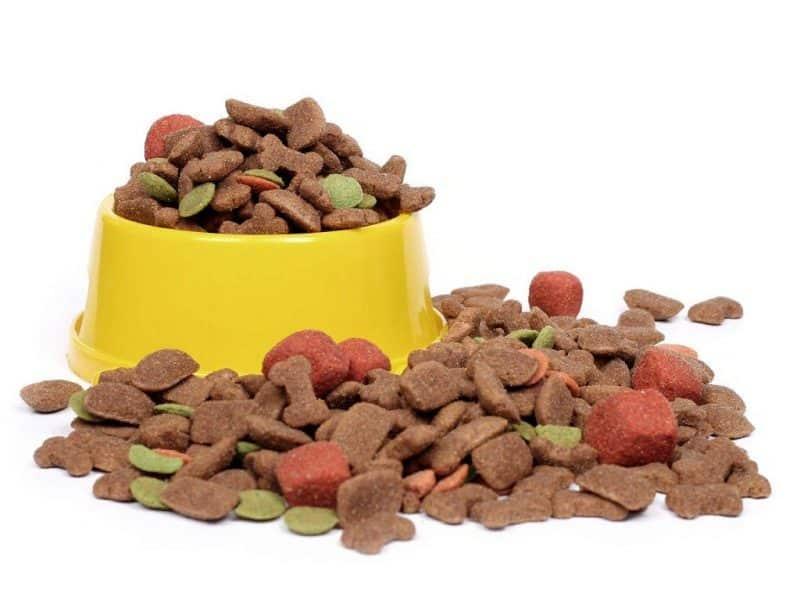 australian silky terrier alimentación adultos