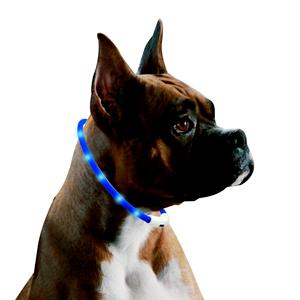 Mejores collares para perros que puedes comprar online
