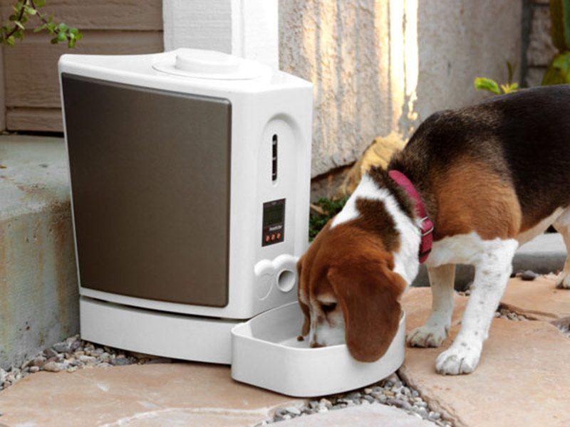 comederos para perros recargables