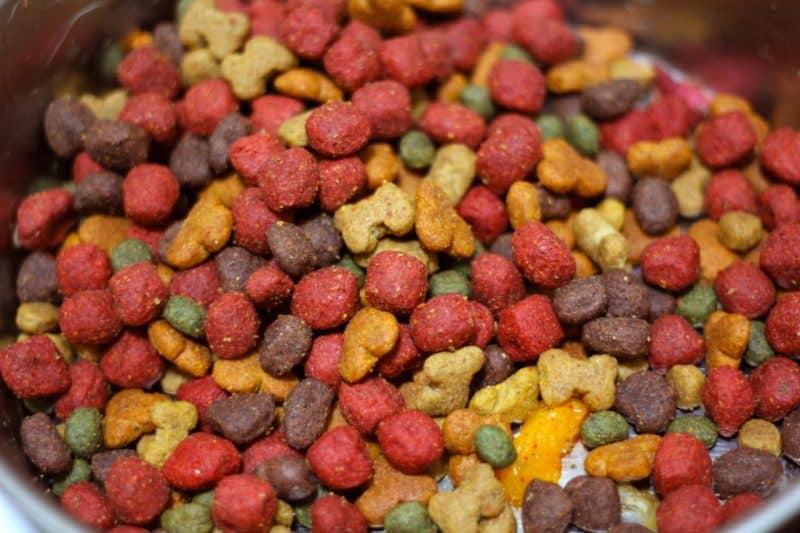 cómo alimentar a un cachorro de perro papillon