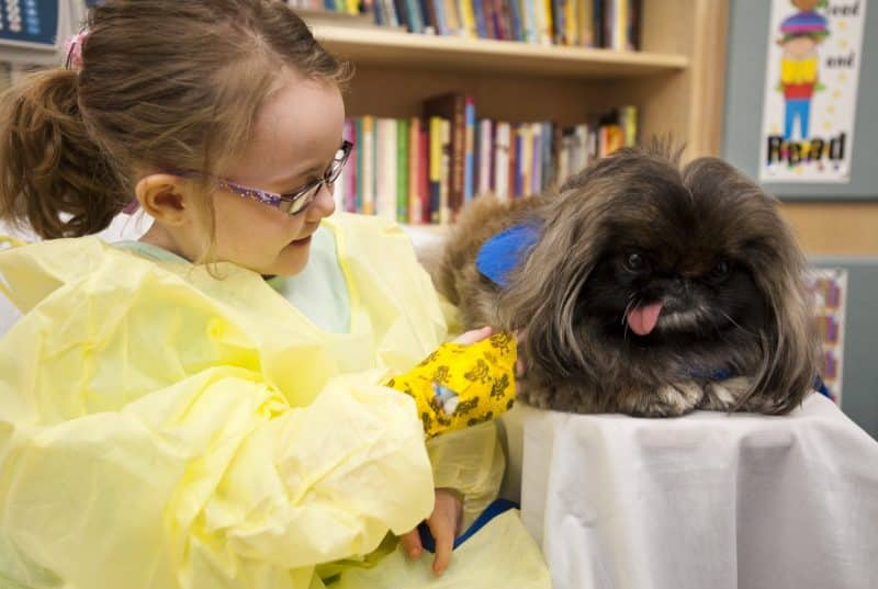 como se relaciona el perro pekinés con los niños