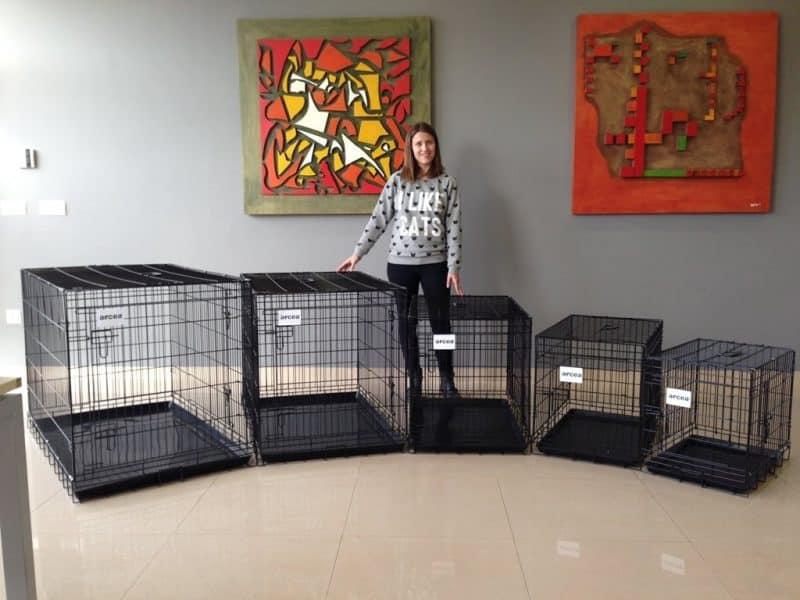 consideraciones al comprar una jaula para perros