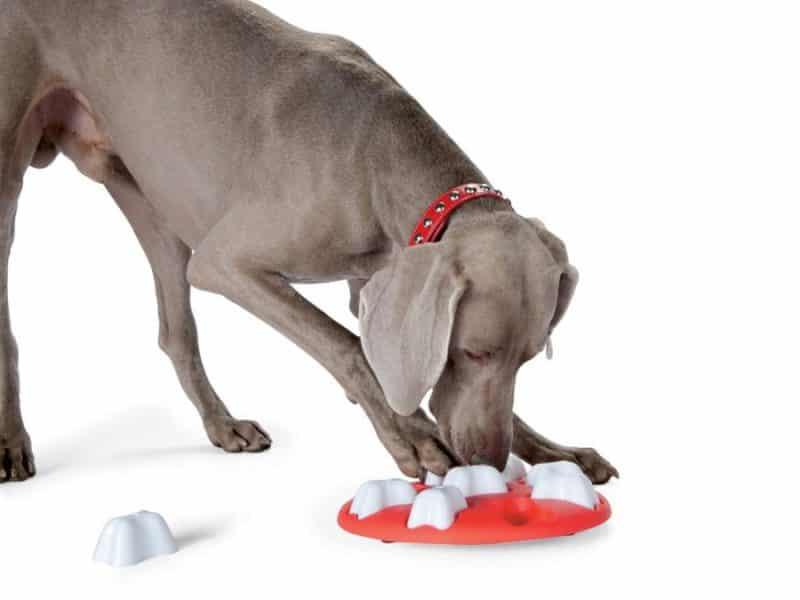 desarrollo de cualidades de un perro