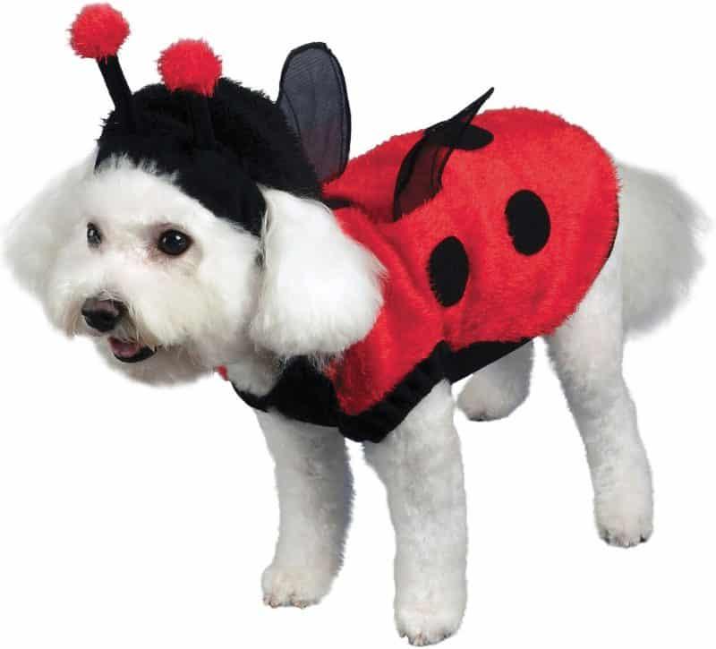 disfraz de coquito para perros