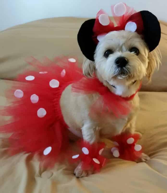 disfraz de minnie mouse para perros