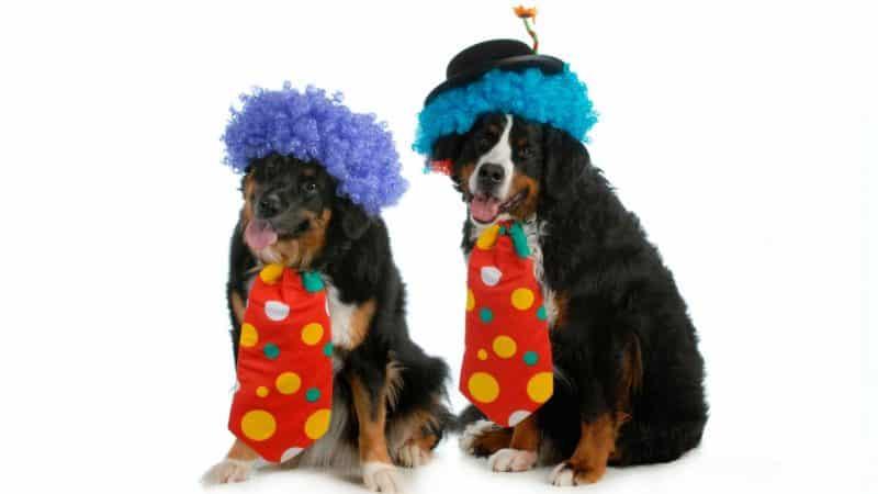 disfraz de payaso para perros