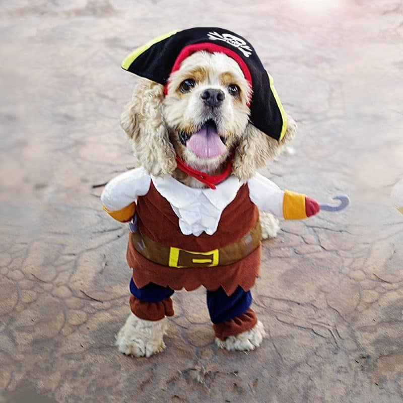 disfraz de pirata para perros