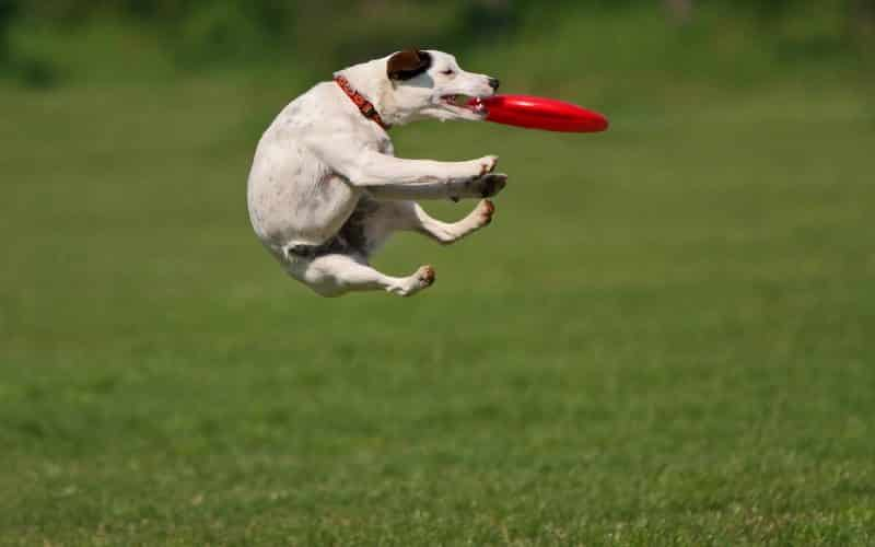 frisbees flotantes para perros