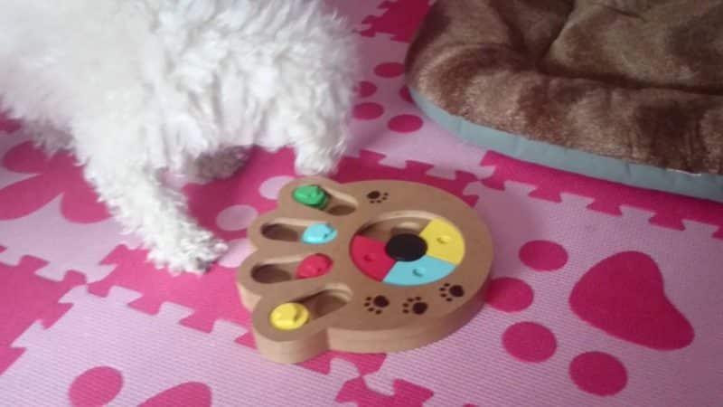 juegos didácticos actividad canina