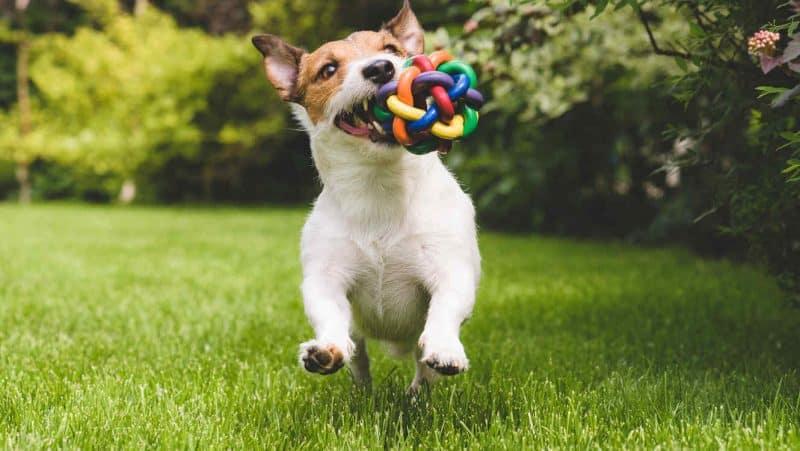 juguetes para perros imagen
