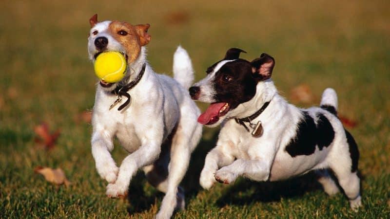 juguetes para perros pequeños
