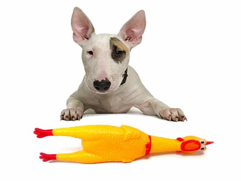 juguetes para perros razas medianas y grandes