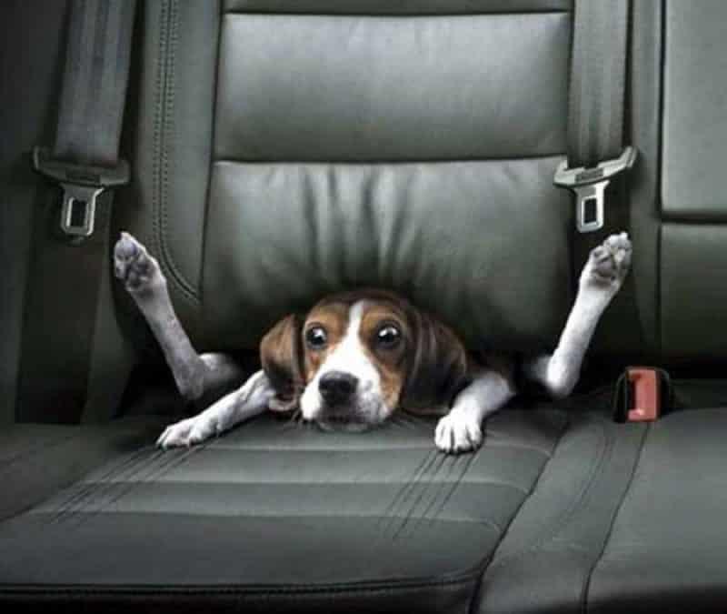 por que es importante y necesario usar el remolque para perros