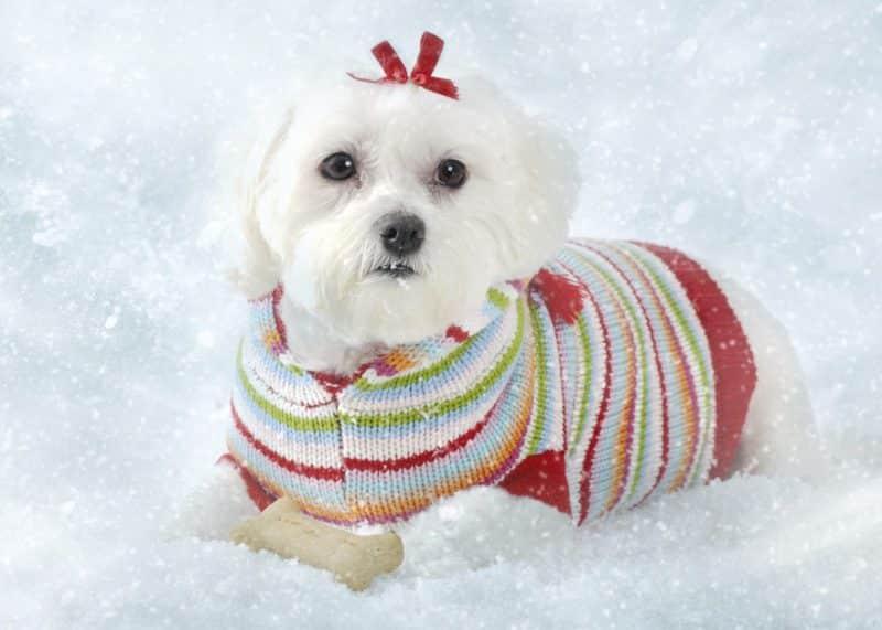 recomendaciones para comprar ropa para perros