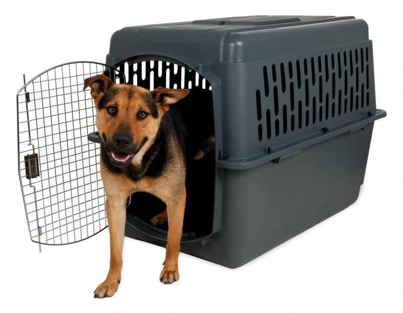ventajas de las jaulas para perros