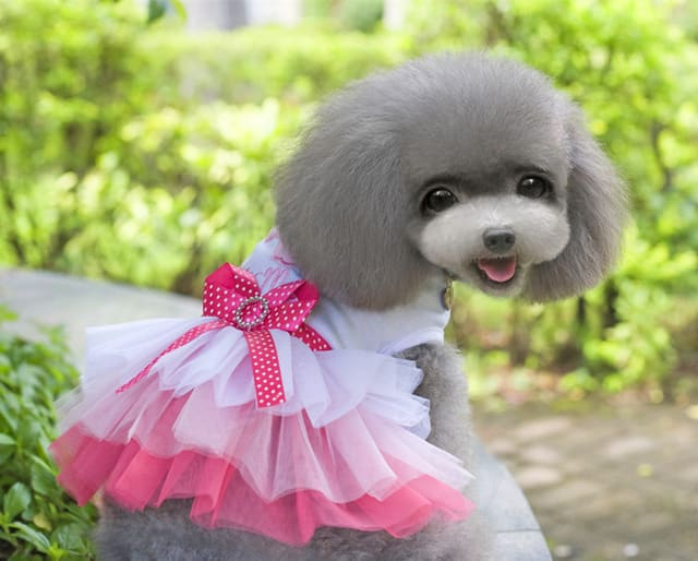 vestidos para fiesta de verano para perros