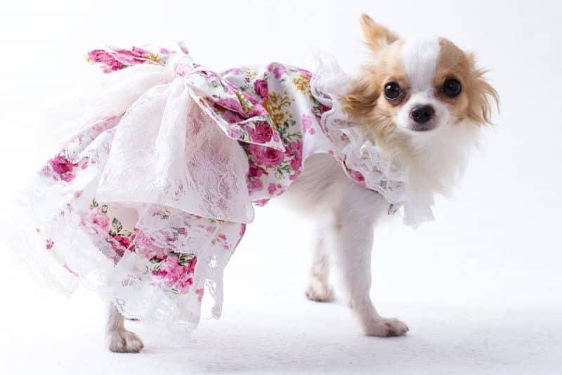vestidos para perros para la boda de una princesa
