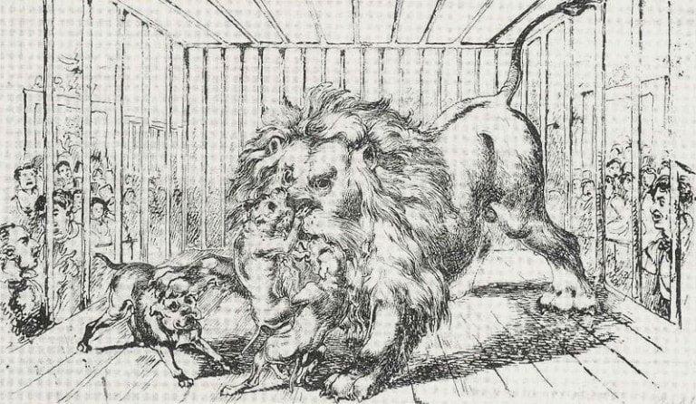 ilustración en que se ve un grupo de bulldogs peleando contra un león