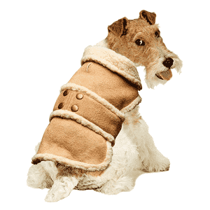 Mejores abrigos para perros que puedes comprar online para perros grandes, pequeños y medianos
